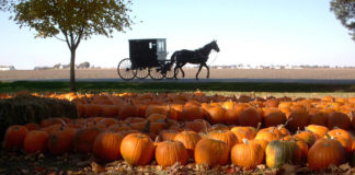 Amish Country, Champaign County, Ill.