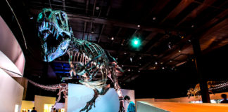 Dig into fun at Houston Museum of Natural Science