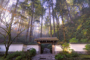 Antique gate and Douglas firs, Portland Japanese Garden, Portland, Ore.