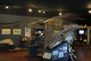 Exhibit, The Whale Museum, Friday Harbor, Wash