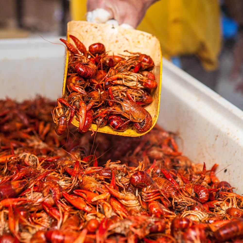 Crawfish, Mudbug Madness Festival, Shreveport-Bossier, La. Shreveport-Bossier festivals