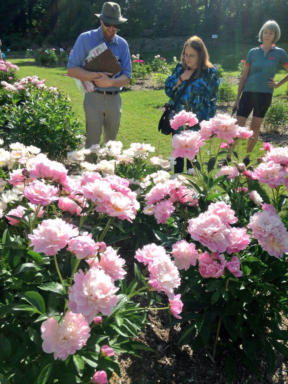 Peony Garden, Nichols Arboretum, Ann Arbor, Mich. Credit: GTM/David Hoekman
