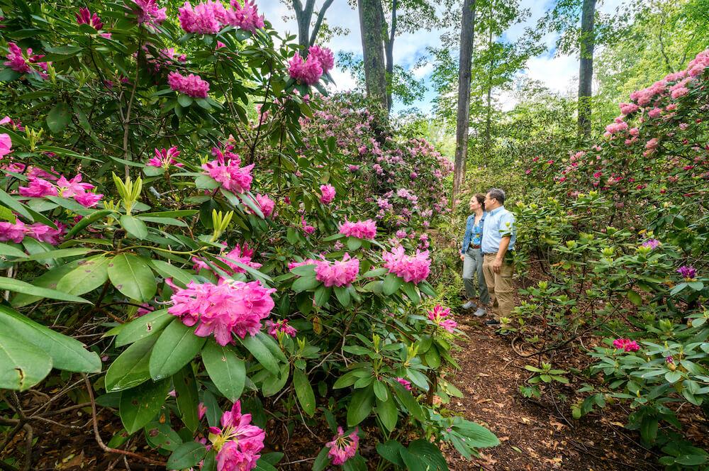 Bartlett Arboretum & Gardens, Stamford, Conn. Credit: Romy Lee