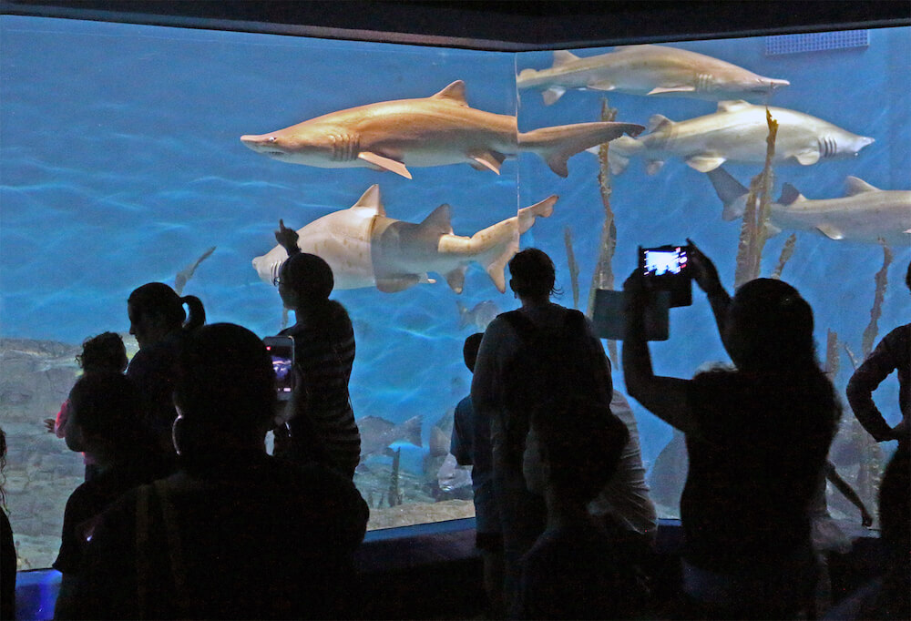 Guests and sharks, The Maritime Aquarium, Norwalk, Conn. Credit: The Maritime Aquarium