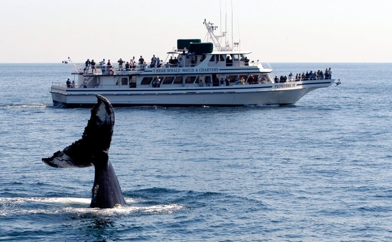 A whale tail in the ocean foreground and a whale watching boat illustrates whale watching in North of Boston region.