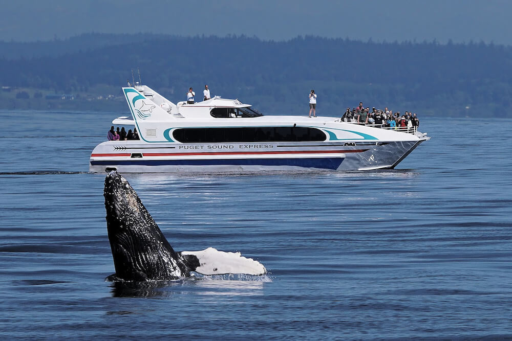 Puget Sound Express boat and whale