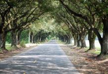 Ascension Parish scene, Louisiana