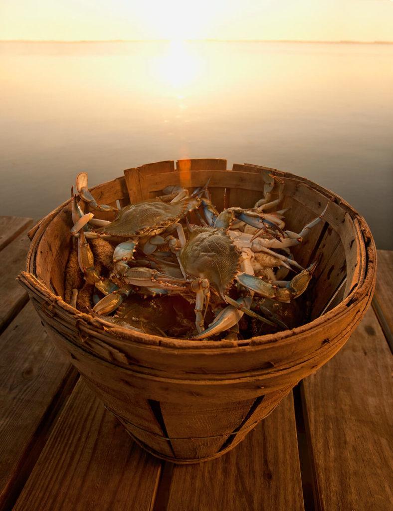 Blue crabs, Virginia Beach