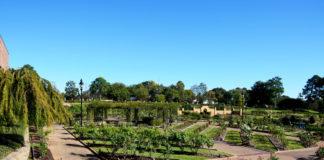 Tyler Texas rose garden