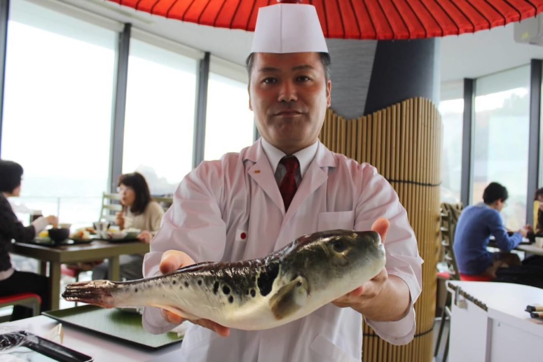 blowfish Tohoku