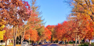Fall in Modesto California