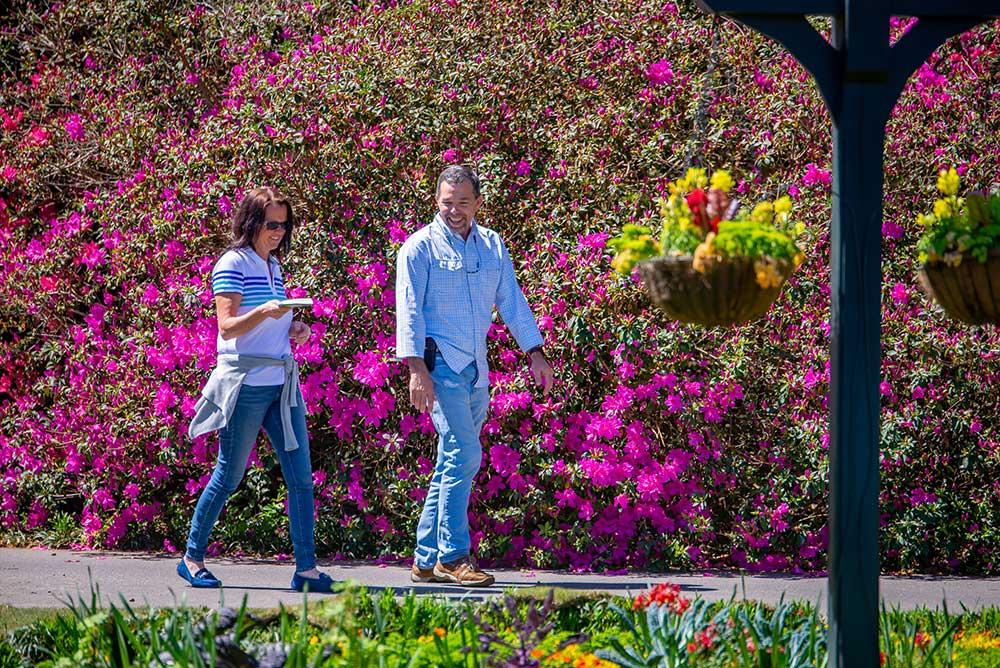 Azaleas on Great Lawn